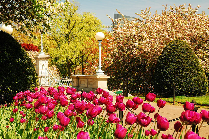 Where to See Spring Flowers in Boston: Gardens & Blooms